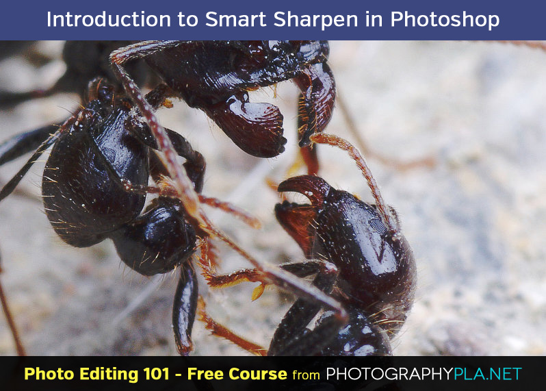 Introduction to Smart Sharpen in Photoshop