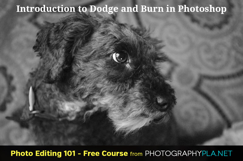 Introduction to Dodge and Burn in Photoshop