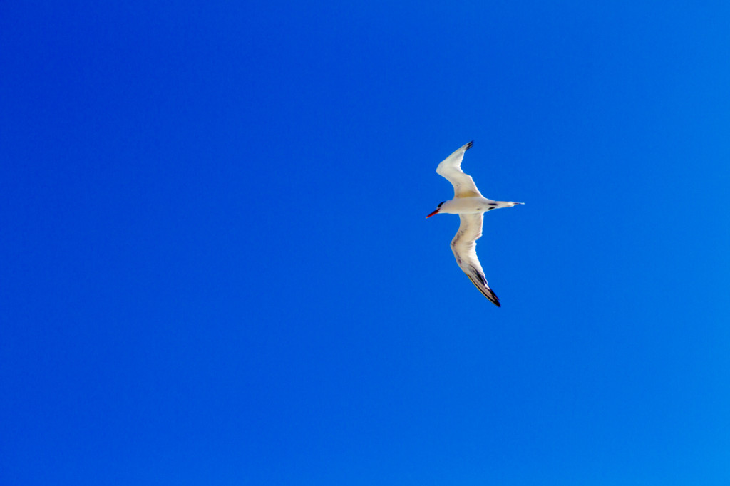 This shot needed a shutter speed fast enough to freeze the bird in flight. 1/400th of a second was plenty fast.