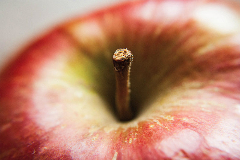 Shooting macro provides a fresh look at ordinary objects. Photo: apple by Catrin Austin